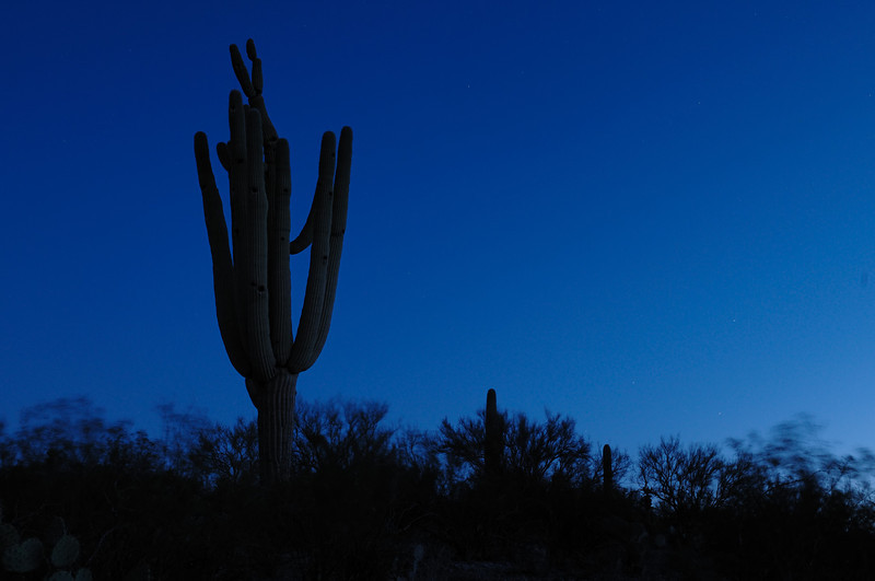 On an early morning hike just outside of Tucson, Arizona. I started before the sun came up which I was warned later was not a good idea, mountain-lion-wise.