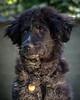 RescuedogsCanon_EOS_5D_Mark_III-2788