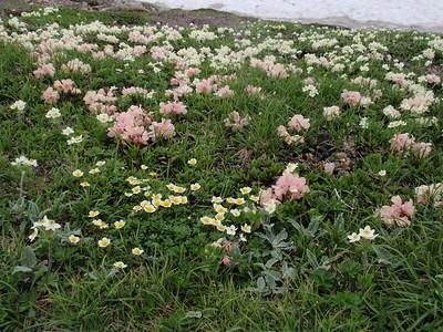 Flower Trekking in Daisetsu National Park 2012, Hokkaido: JAPAN