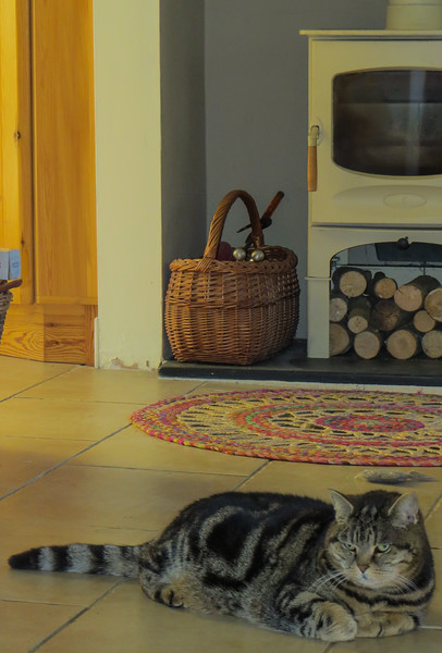 Sue - home sweet cat.jpg