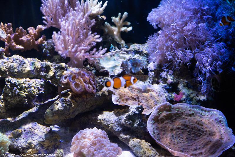 Coral exhibit with Nemo.