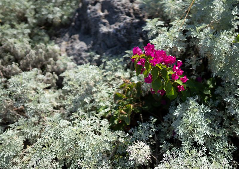 Gardens at the Ikos Dassia, Corfu