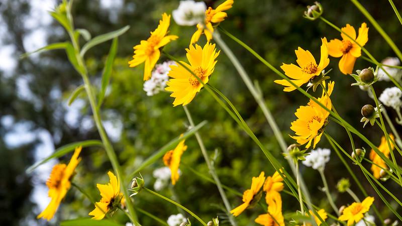 Texas Spring-0618.jpg