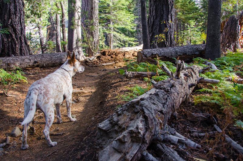 Mt. Tallac Trail