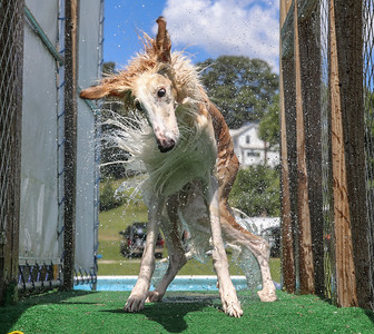 Ultimate Air Dogs - 7 Aug 2016