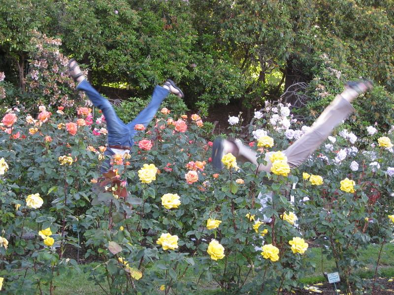 staceecalderon - rosegardensportlandor3.JPG