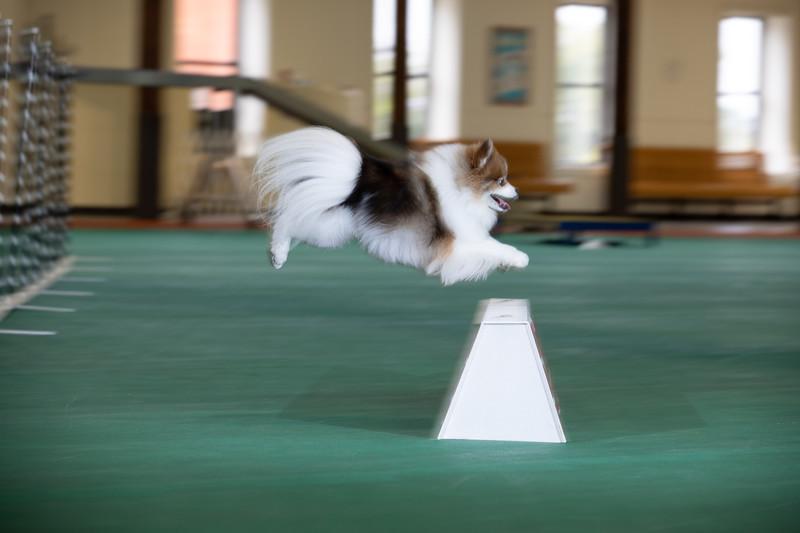 SPCA_Agility-16.jpg