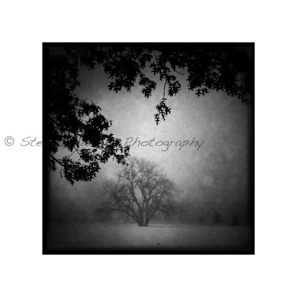 Sister Tree.jpg