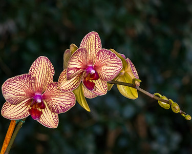 The Orchid Show - 2006