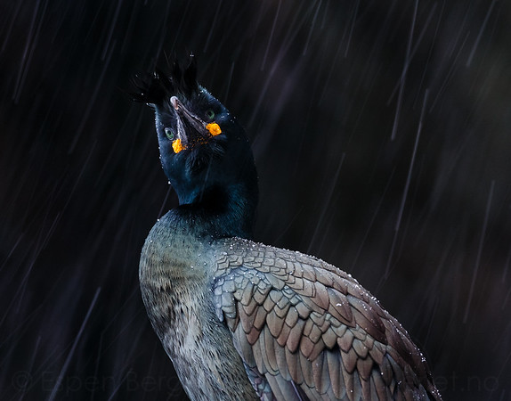 """Nordic Nature Photo contest 2018 - 3rd price in the category """"Birds"""""""