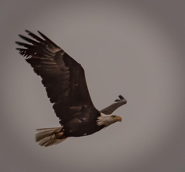 Eagle2-2