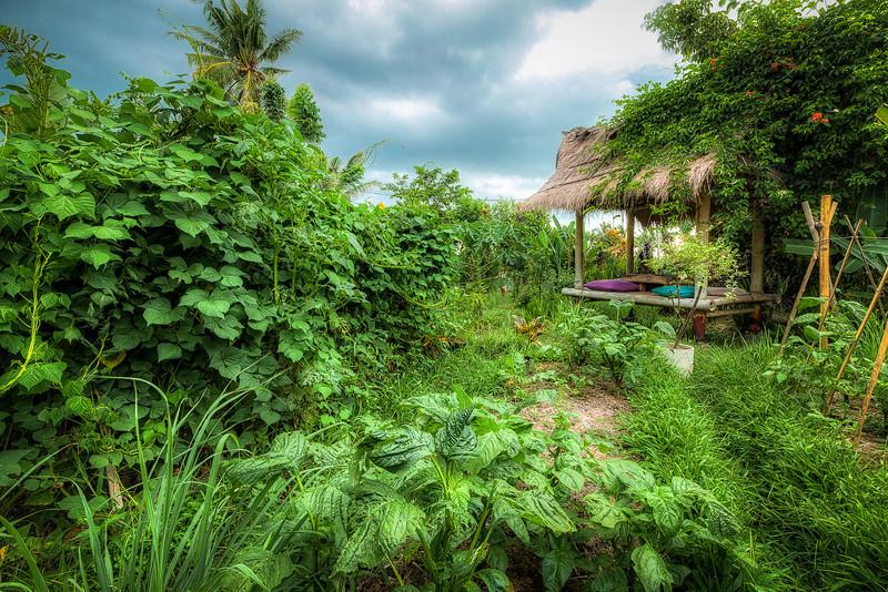 Alik-Griffin-Bali-Indonesia-Sari-Organik-Garden.jpg