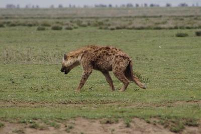 1494239976African-Safari-54.jpg