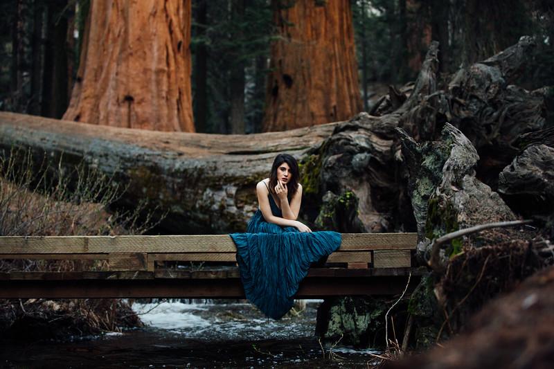 Eya Winters Sequoia Shoot-623-6567.jpg