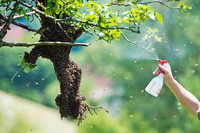 bee swarm story