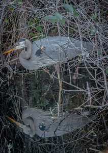20140116_SHARK_VALLEY (12 of 25)