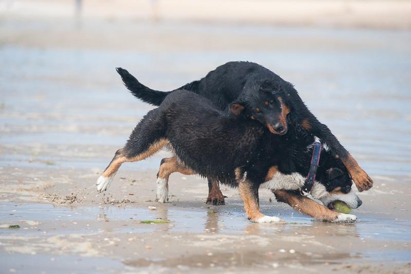 honden-05682.jpg