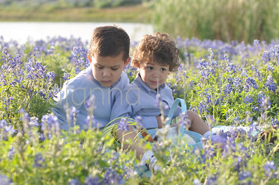 Noah and Gabriel bluebonnets 2013