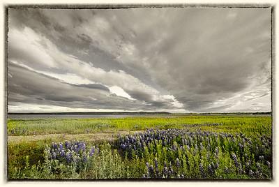 Landscape/Nature