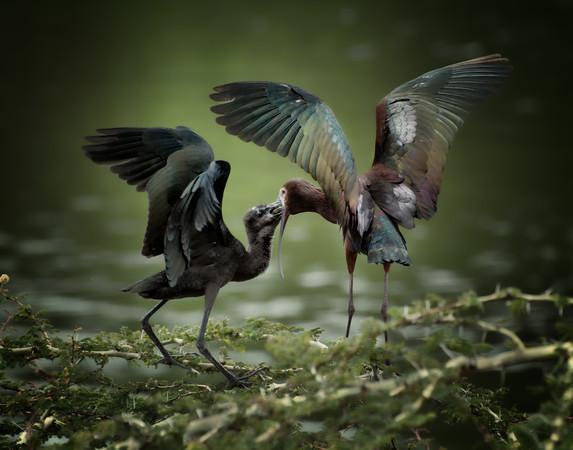 Wildlife Birds