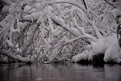 Snow Majesty