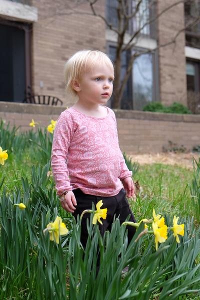 20160312 074 daffodils.JPG