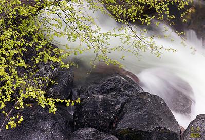 Yosemite NP, CA, May 28-30, 2011