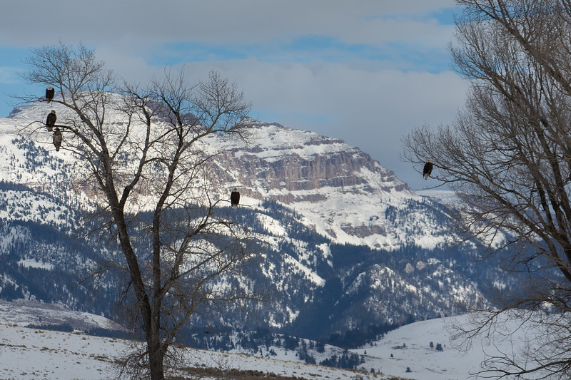 eagle (1 of 1)-27.jpg