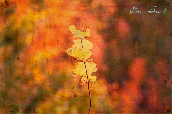 seasonal closeup blog.jpg
