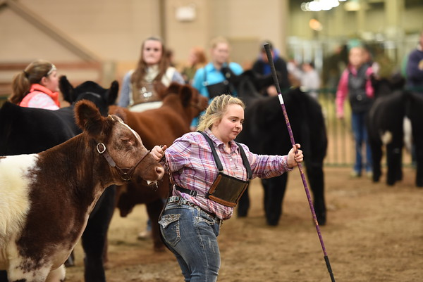 Champion Breed Steer Drive