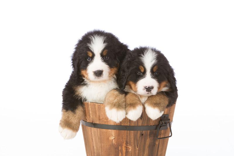 2013-Pearson Pups-Jun02-0449.jpg
