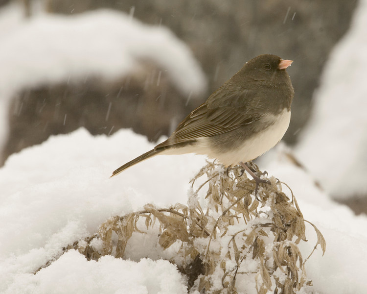 snowbird9270.jpg