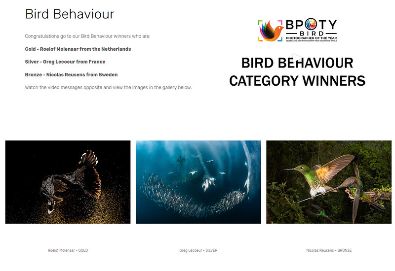 Bird Photographer Of The Year Award 2020