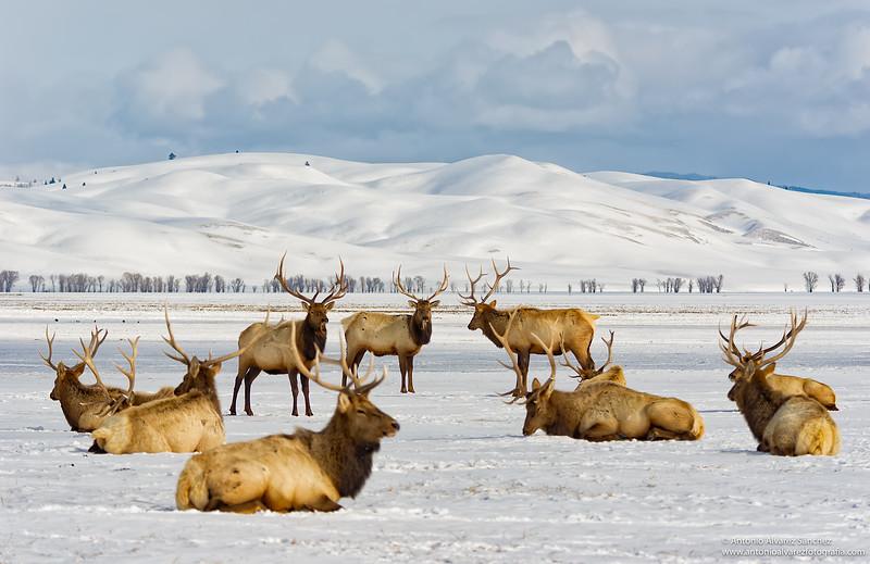 Recuerdos de Wyoming / Memories of Wyoming