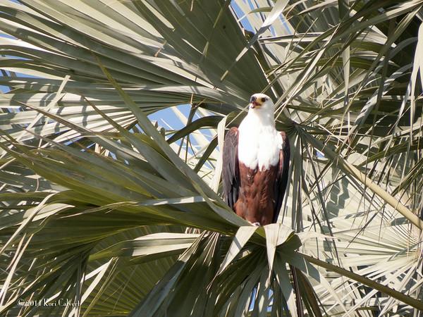 Fauna Wild Nature