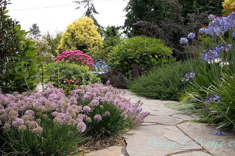 Allium 'ALLMIG1' Millenium - Agapanthus - Monarda summer garden path_1263.jpg