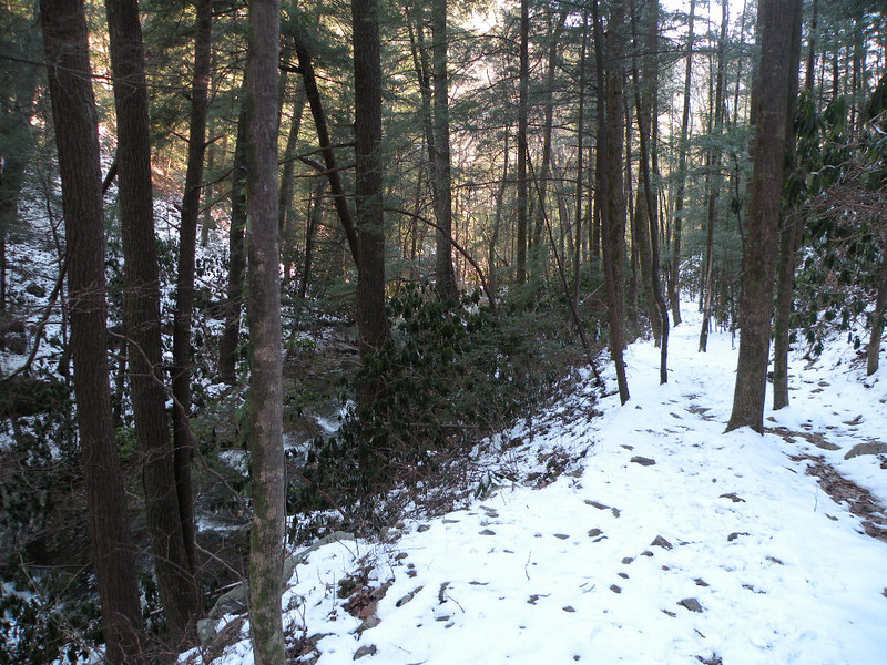 Morning light beginning to shine in the forest along the Scenic Spur Trail
