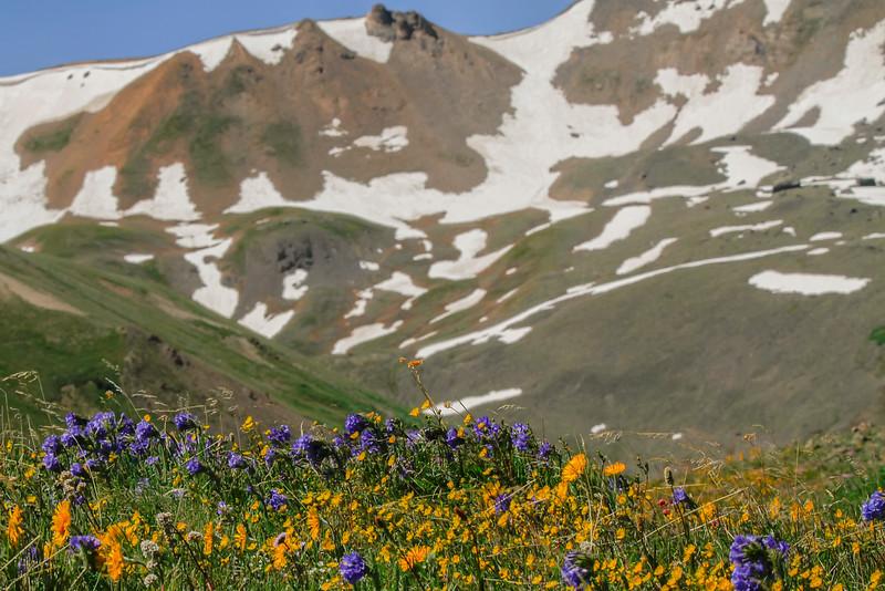 Wildflowersd.jpg