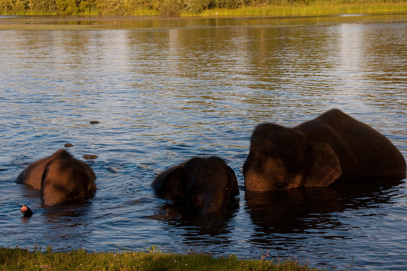 african safari Park-Canada-19.jpg