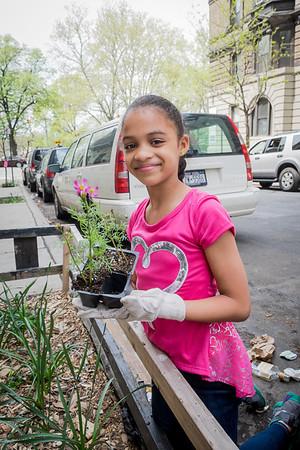 137th Street Block Planting