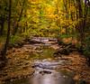 Vivid Autumn Colors