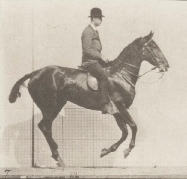 Horse Daisy cantering, saddled with rider