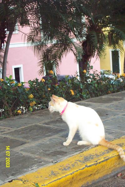 Brian Cat 1.jpg