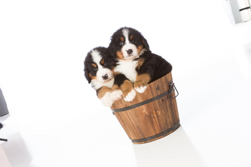 2013-Pearson Pups-Jun02-0415.jpg