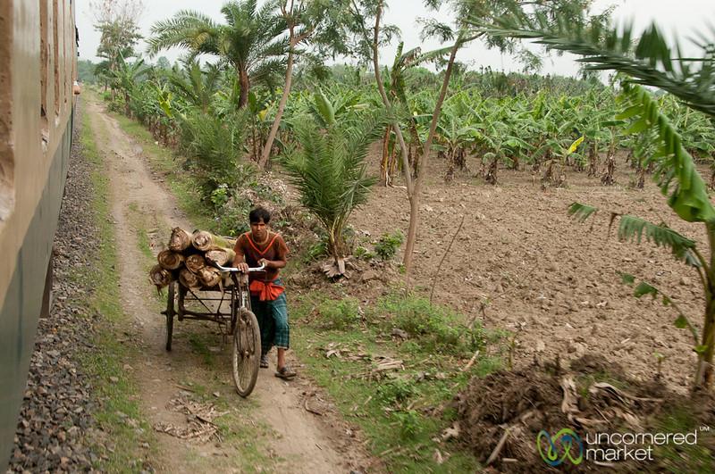 Bicycle Transport for Logs - Khulna to Rajshahi, Bangladesh