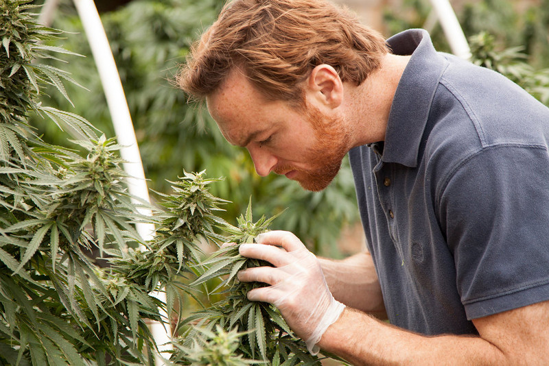 ". Matt Shotwell inspects BE Smith\'s plants  in ""Weed Country\"" on Discovery Channel."