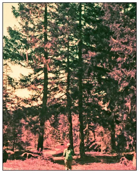 Kodak Ektramax 110 - Lomochrome Purple. Ramona Fall Trail April 2020.