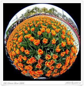 Hong Kong Flower Show 2008