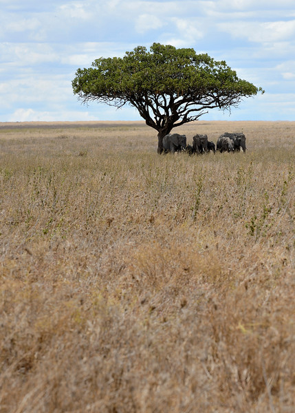 Resting-Elephants.jpg