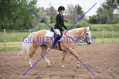 Colorado Pinto Horse June 12th 2016